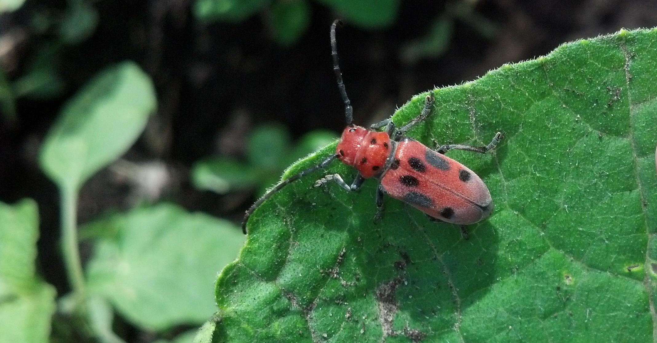 Integrative Pest Management